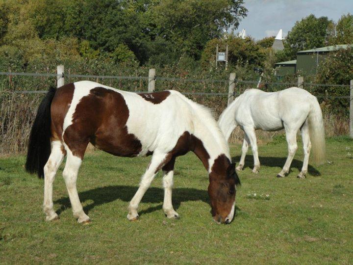 Holmewood Farm Horse Livery Yard A Horse Yard On